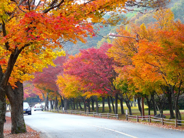 Fall Life