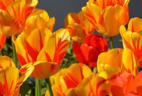 Spring – Your New Resolve