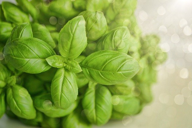 Herb To Know – Let's Talk Basil